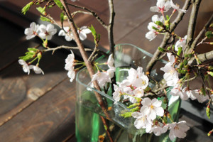 0408桜1